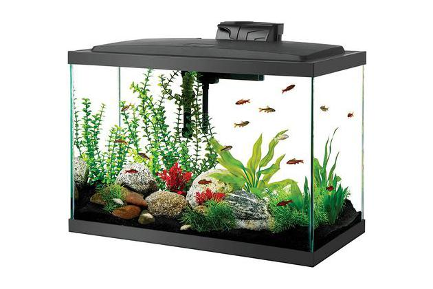 Pet Supplies Dedicated Plastic Aquarium With Lid Acqua Friend