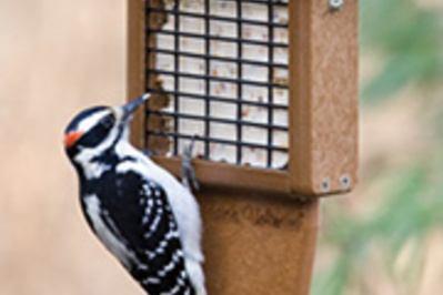 Wild Birds Unlimited EcoTough Tail Prop Suet Feeder